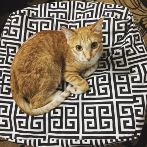 Cats Ottoman Decor fashion and frappes