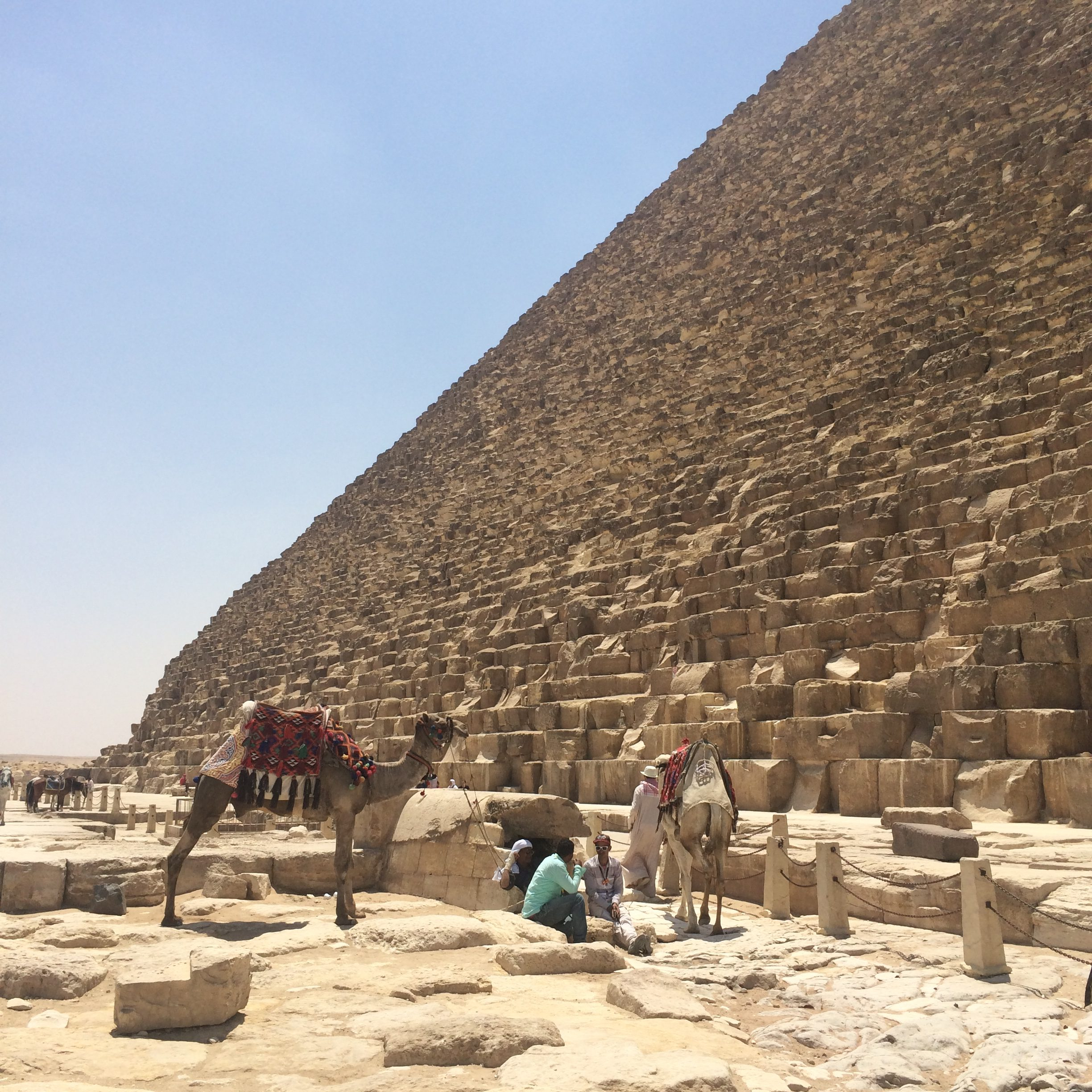 Cairo Pyramids and camels