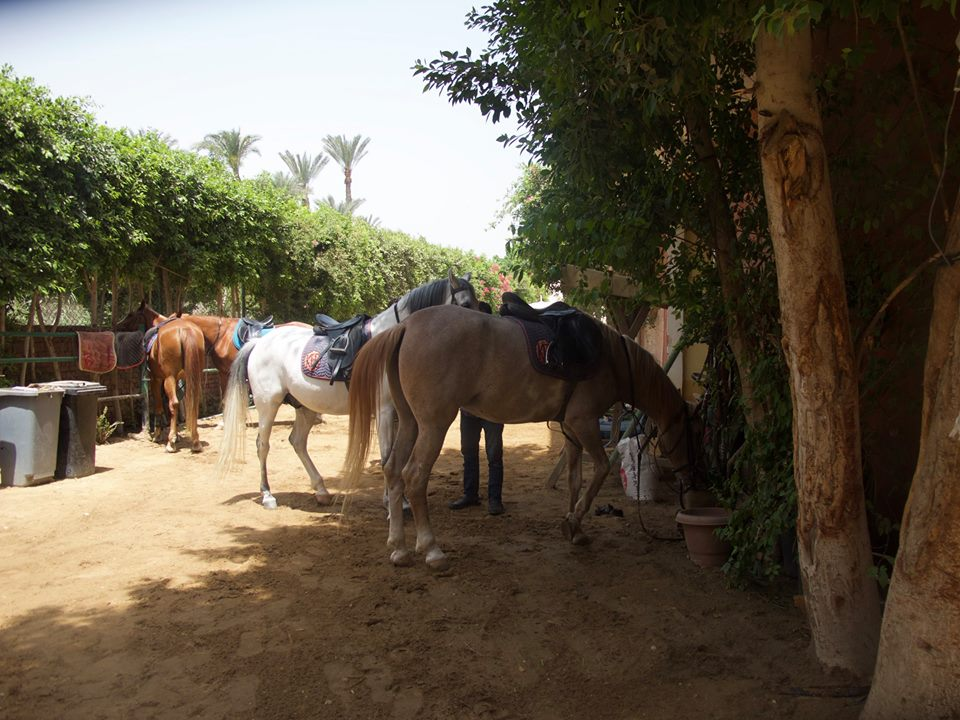 Horse riding in the desert Egypt