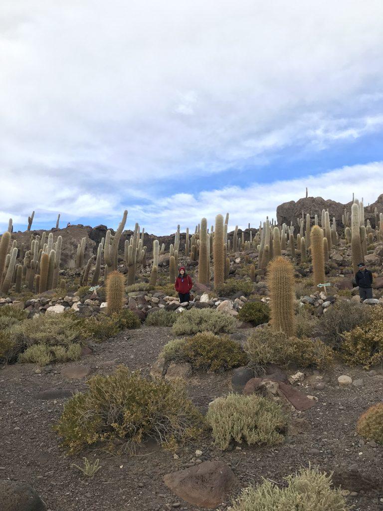 Isla Incahuasi (Fish Island) Salar de Uyuni, Bolivia