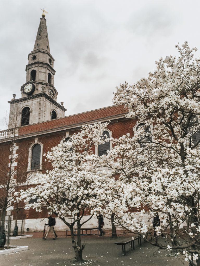 Sakura in London Cherry blossom Skincare for men